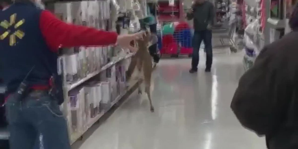 Customers help deer trapped in Wooster Walmart