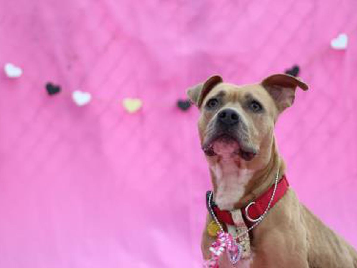 Cleveland animal shelter reducing adoption costs for Valentine's Day