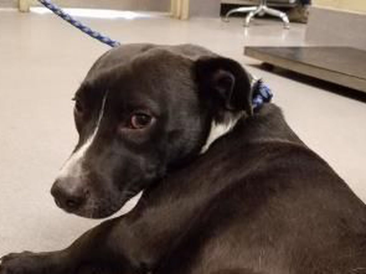 Buddy the dog needs a Furever home for Christmas: Cleveland APL Pet of the Week