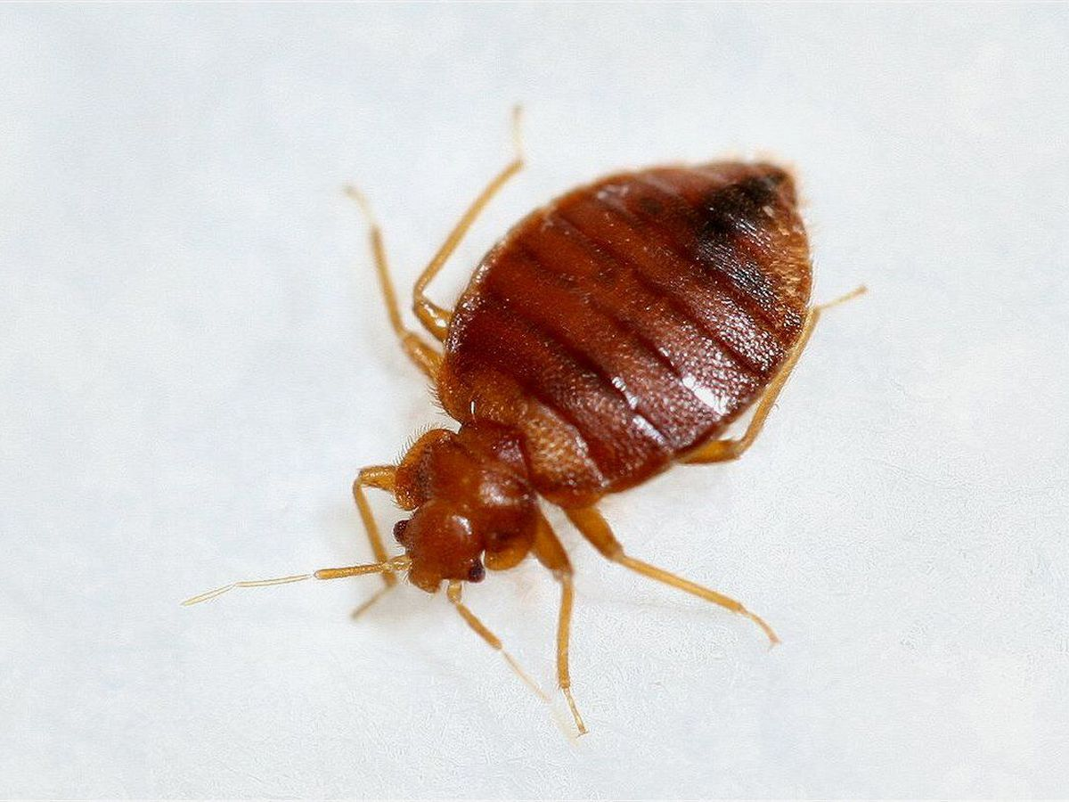Cleveland tops list for most bed bugs in the country