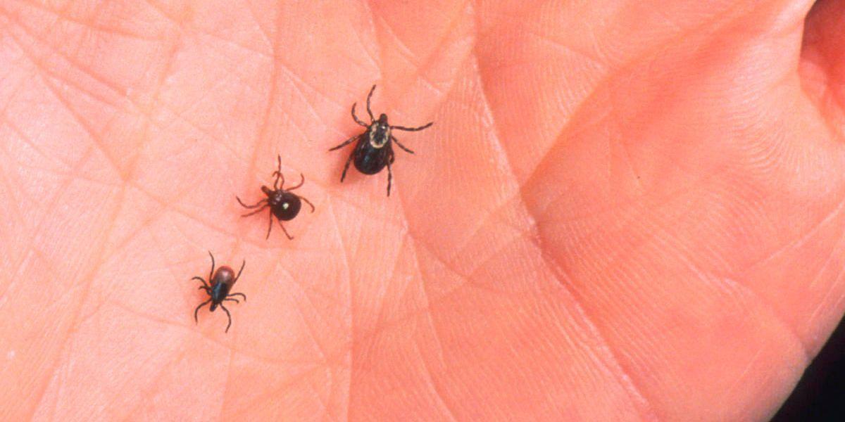 Ohio Department of Health says tick-borne Lyme Disease still a threat