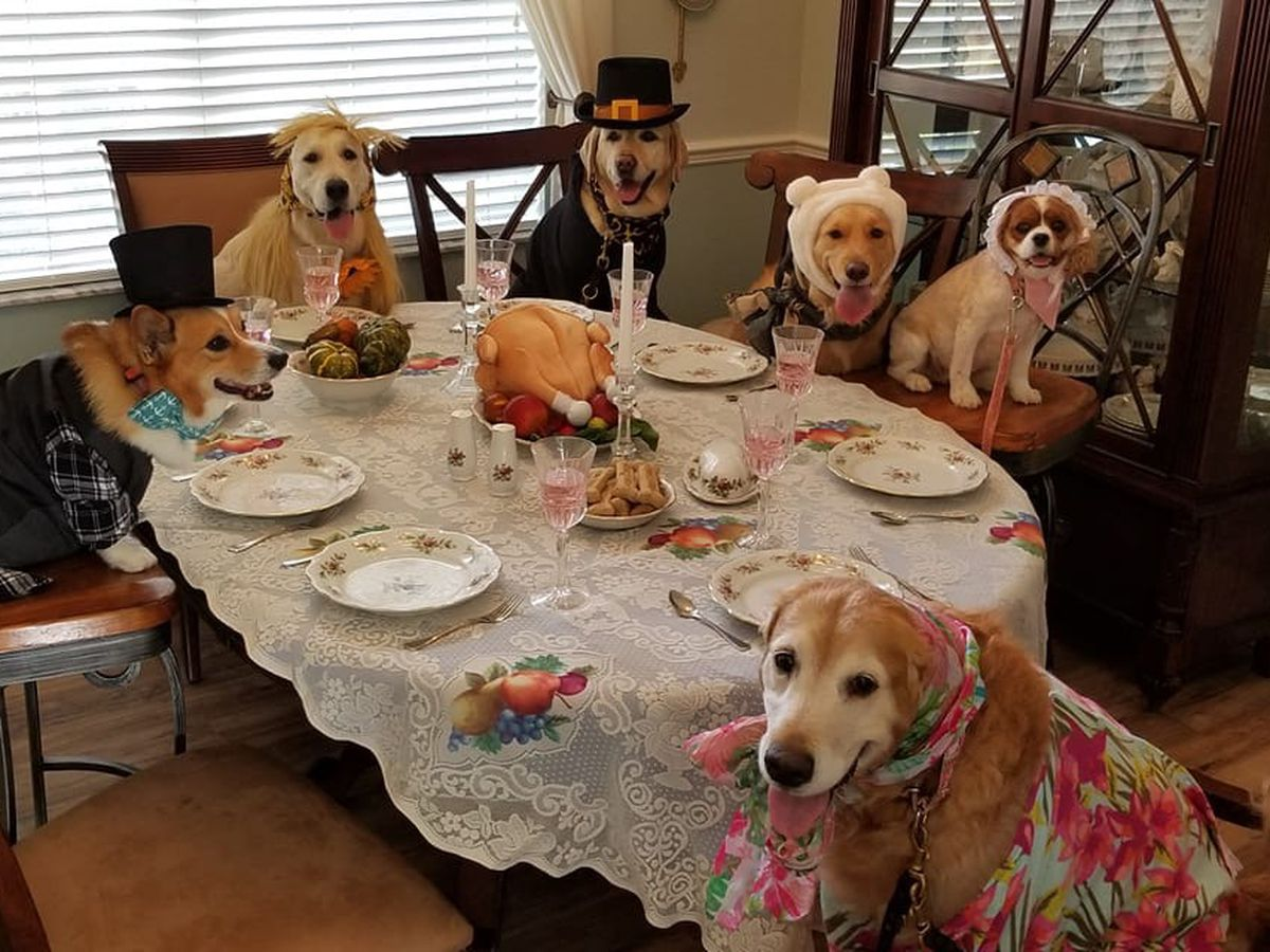 Thanksgiving table staples that could be toxic to your pets