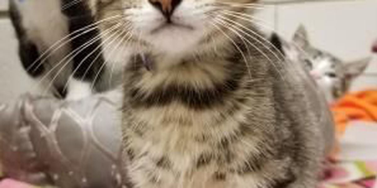 2 cats need Furever Homes: Cleveland APL Pets of the Week