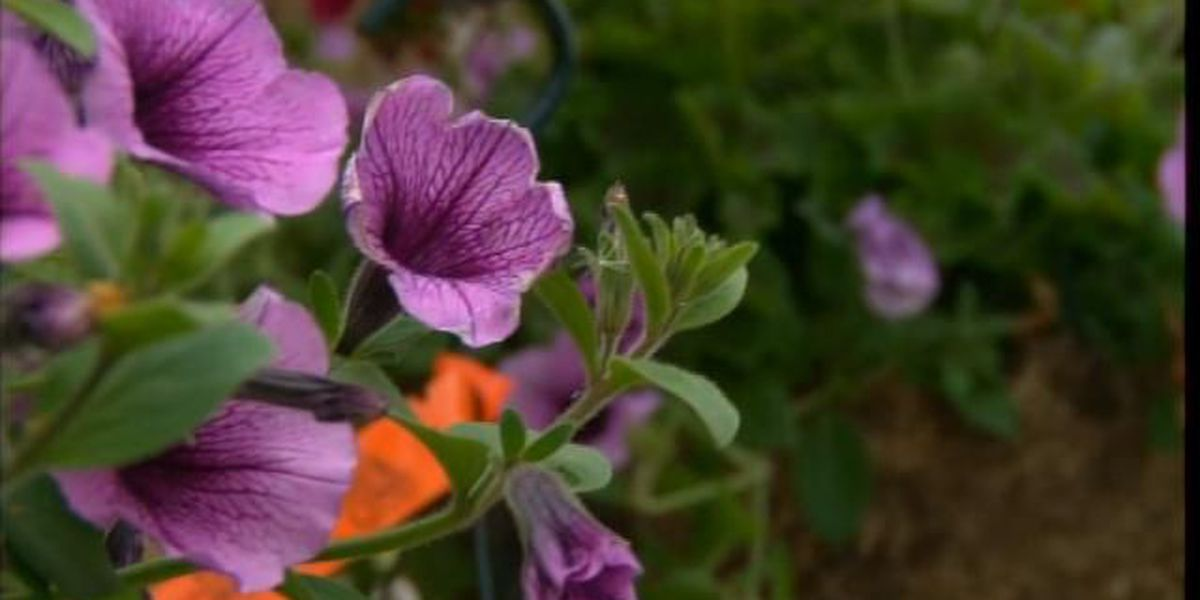 Waiting to clean your garden can benefit your yard according to the Cuyahoga Soil & Water Conservation District