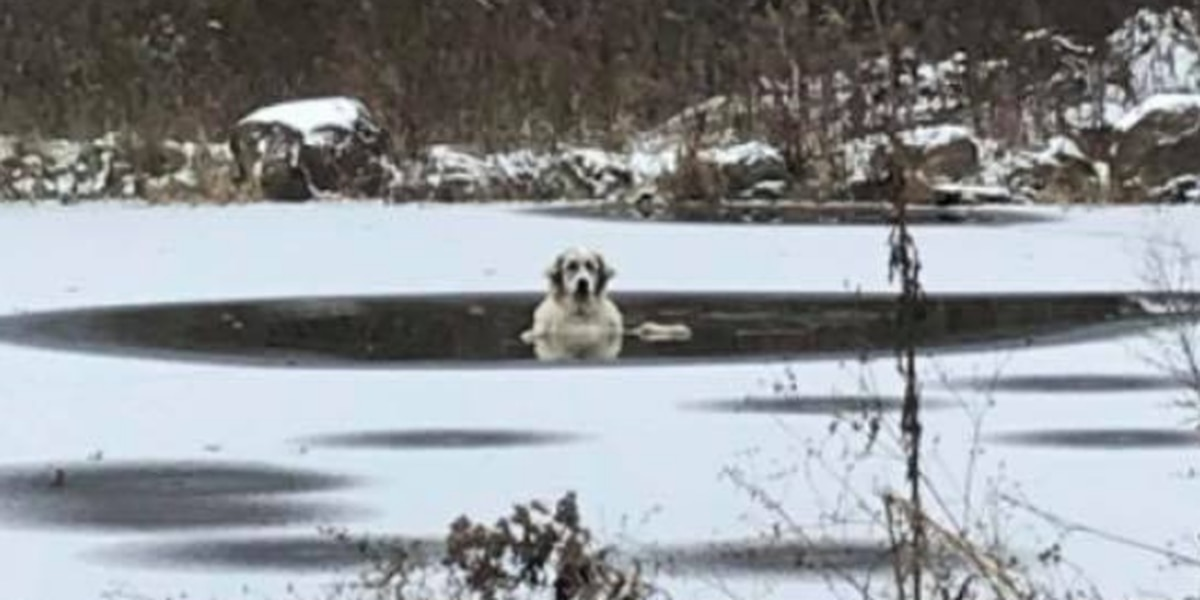 Norton firefighters rescue dog struggling in frigid waters