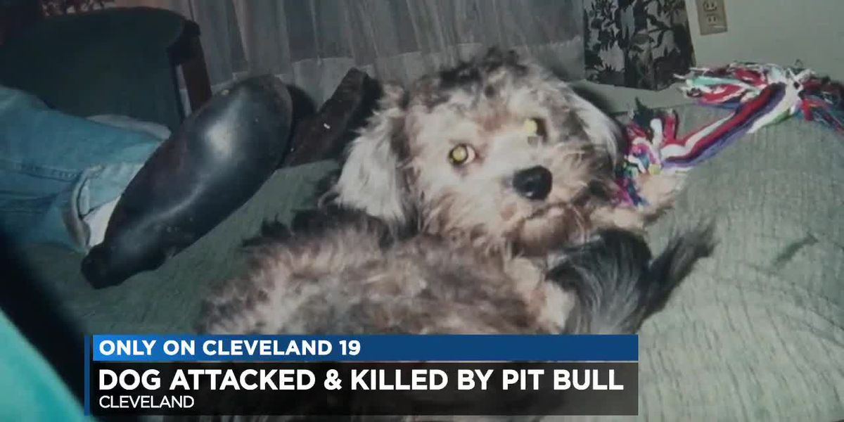 Family dog killed by Pitbull