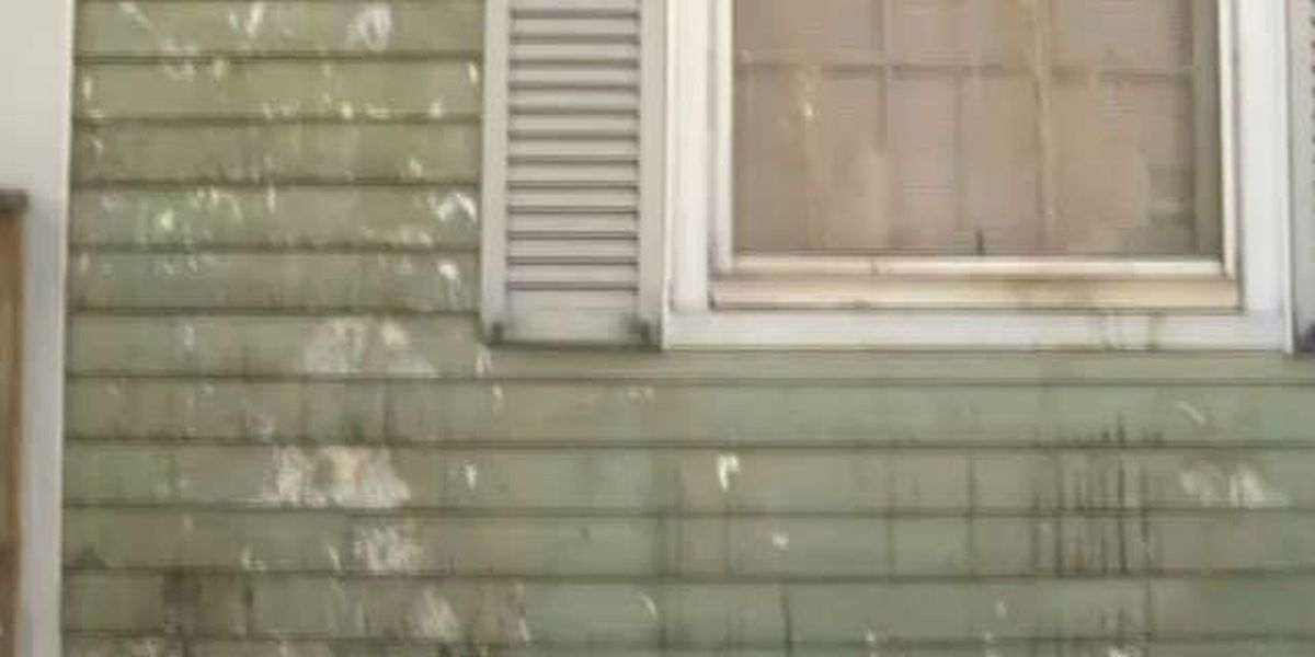 Police hope reward helps them crack annoying home egging case