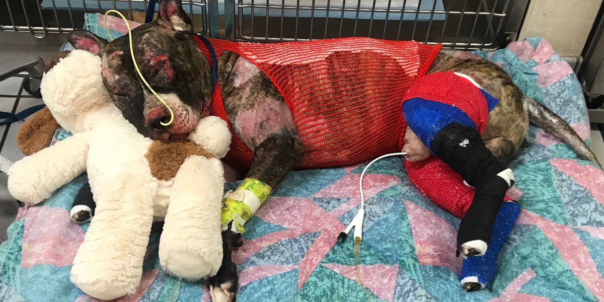 Community rallies after beloved Tommie, the dog tied to pole and set on fire, dies
