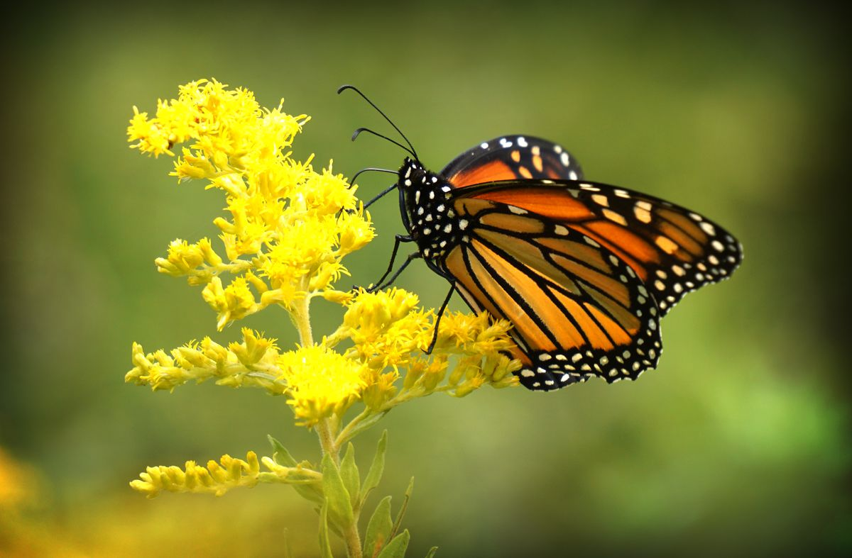 Ac Unit Prices >> Monarch Butterflies visit Cleveland's Whiskey Island ...