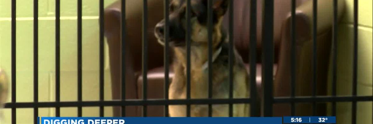 After pet dog's tragic escape and death from kennel, what should we all do?