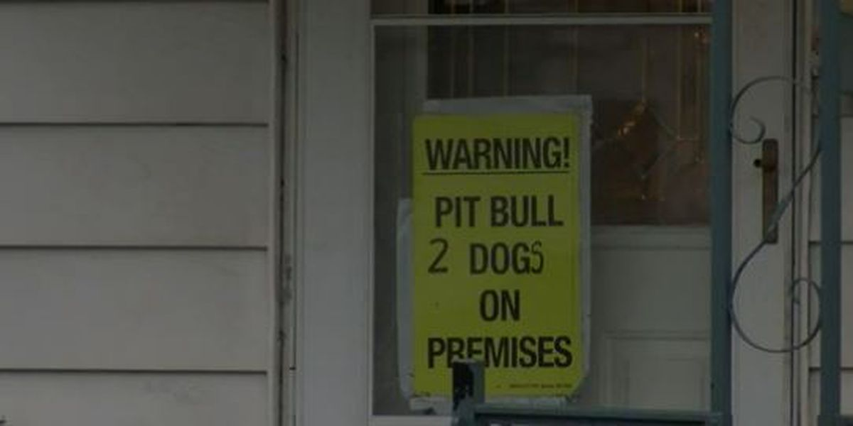 More victims attacked by three pit bulls in Akron are speaking out