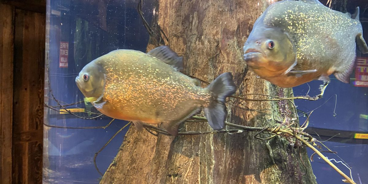 Greater Cleveland Aquarium reopens with changes due to COVID-19; staff expects it to go 'swimmingly'