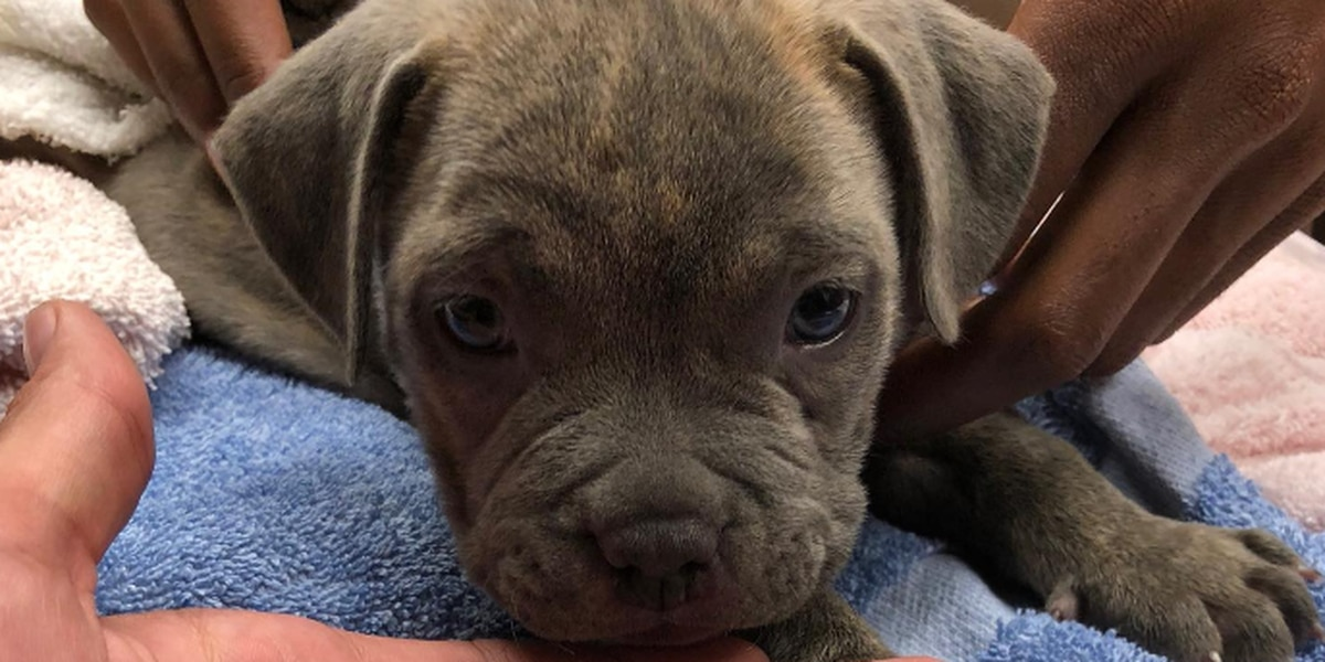 Crying Puppy Rescued From Blistering Hot Car By Sagamore Hills Police