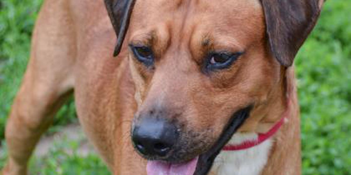 Cleveland APL Pet of the Week: Surfboard is a hound dog on the hunt for a furever home