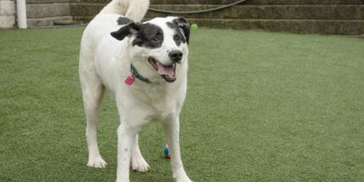 Pet of the Week: Komet, a fun and energetic mixed breed, is hoping to find a new family