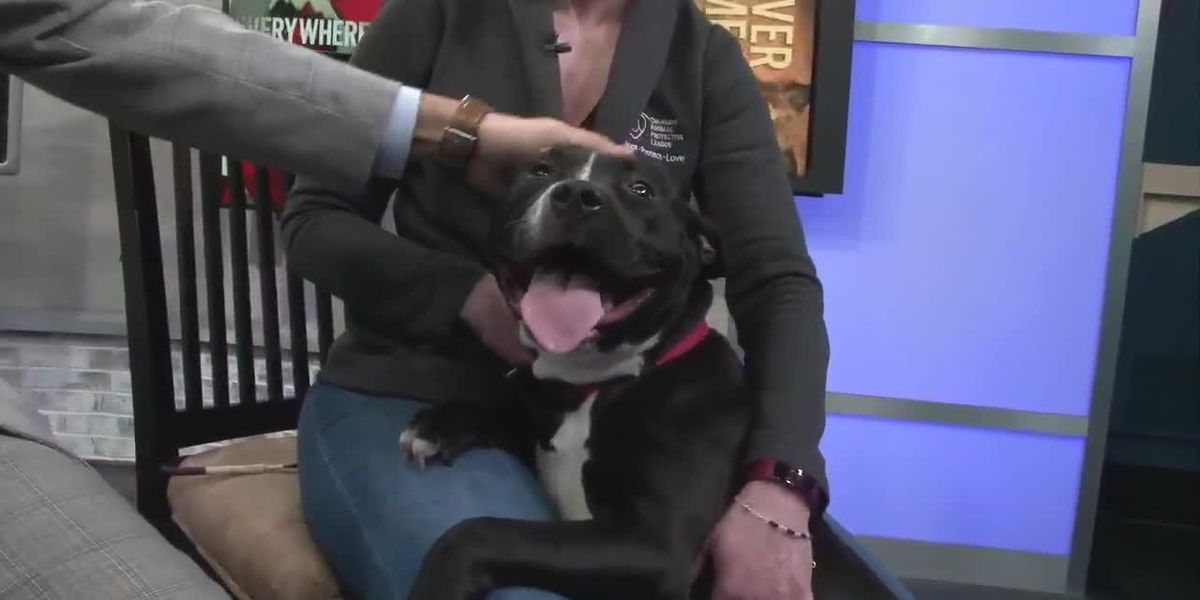 Cleveland APL Pet of the Week: Her name is Miss Piggy, you'll get it when you hear her bark