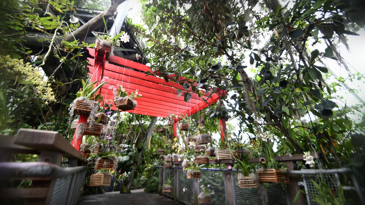 Orchid Mania at Cleveland Botanical Gardens will feature 4,000 flowers during its 45 day run
