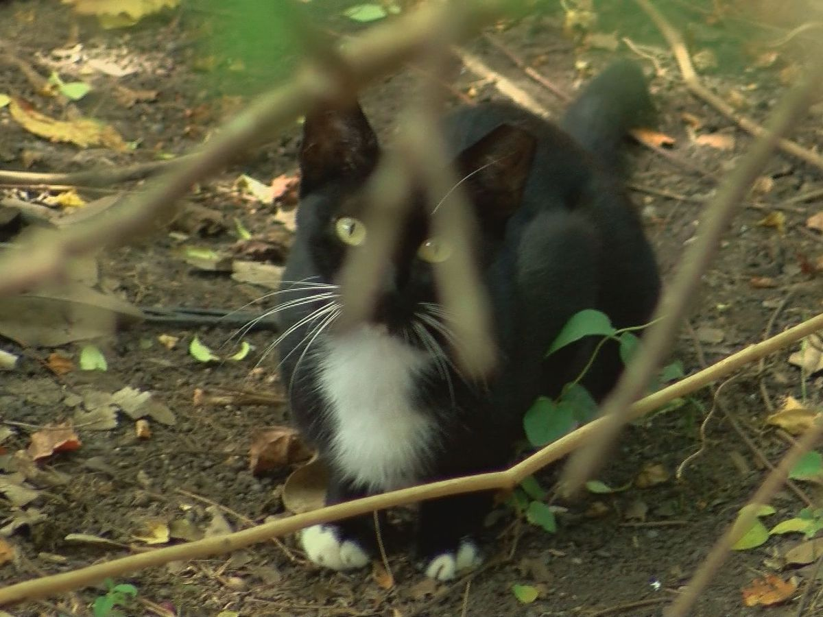 Painesville Township launches program to trap stray cats and vaccinate, sterilize them before release