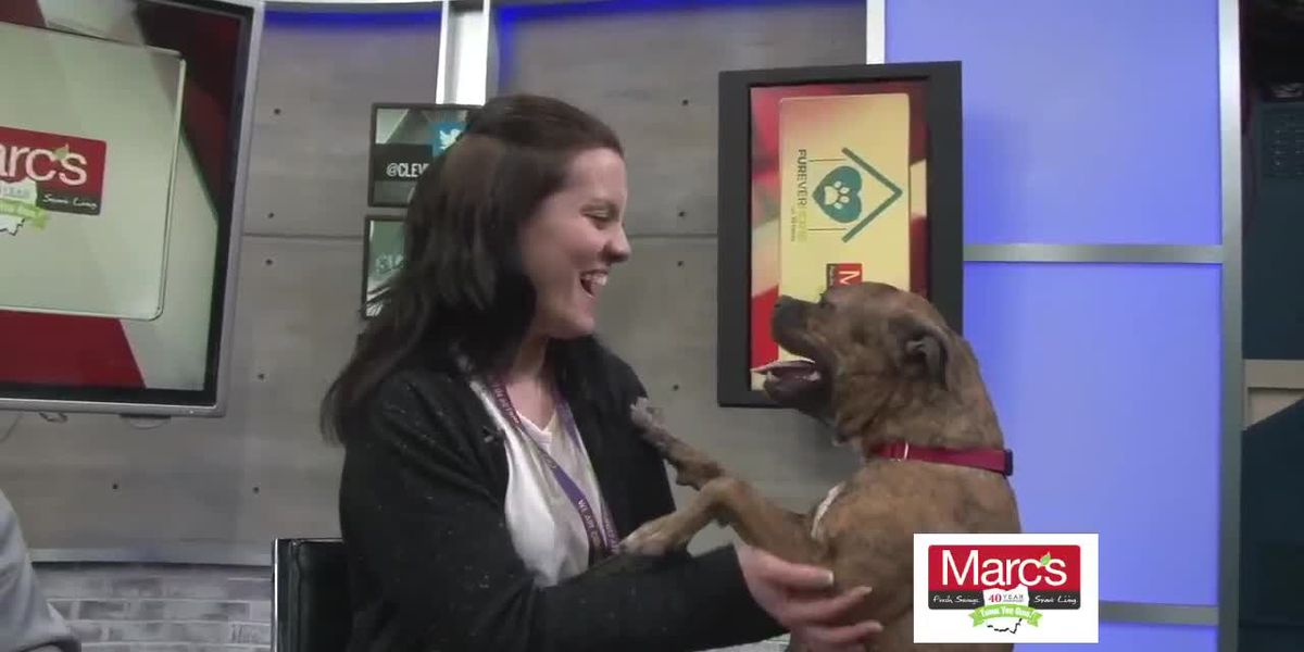Cleveland APL Pet of the Week: Warmhearted girl in need of a good home