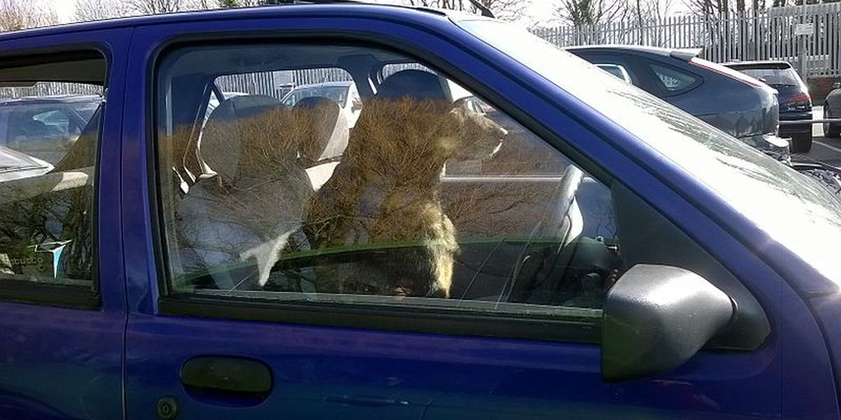 Drivers holding a pet will be cited under Ohio city's new distracted driving law