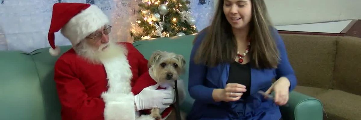 K9 Cleveland hosts Christmas Frolic holiday party