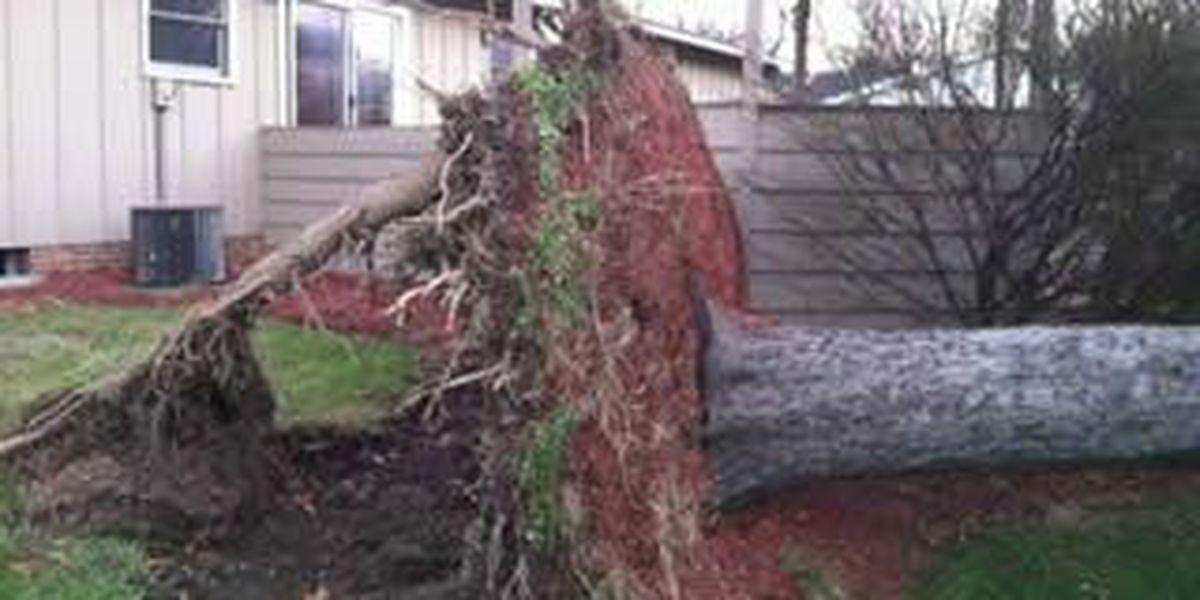 PHOTOS: Wicked winds uproot massive tree in Strongsville