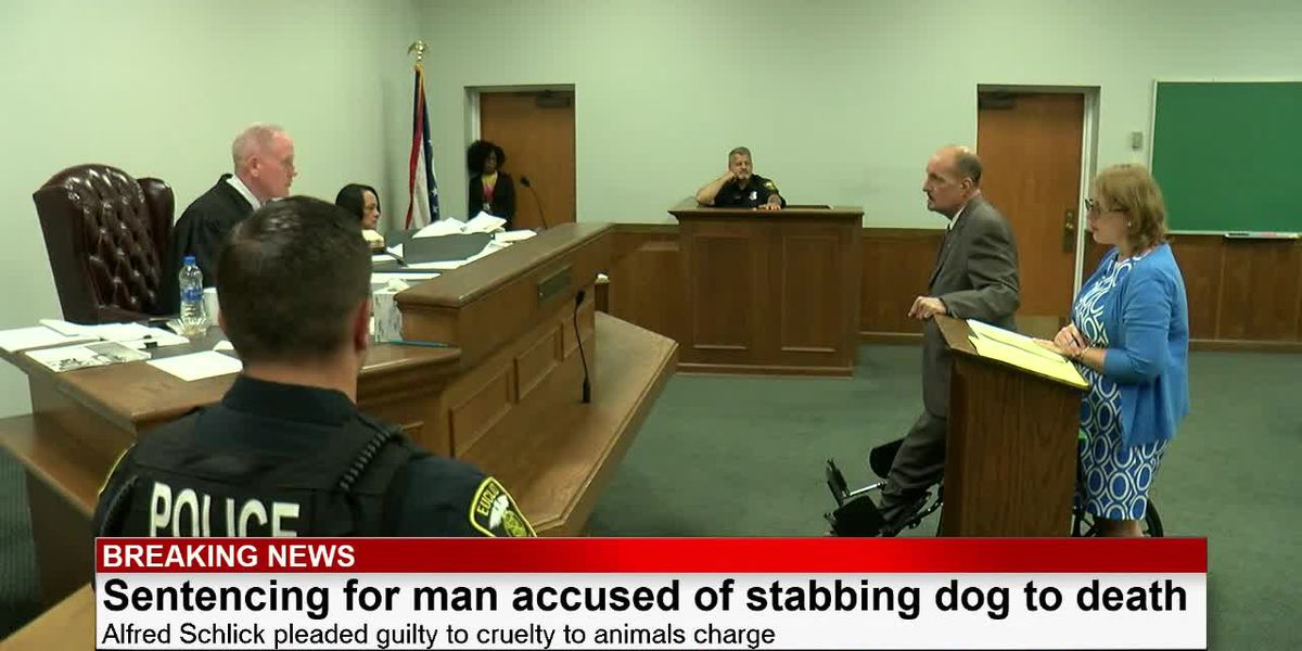 Judge lashes out at dog killer before sentencing him to 180 days in jail