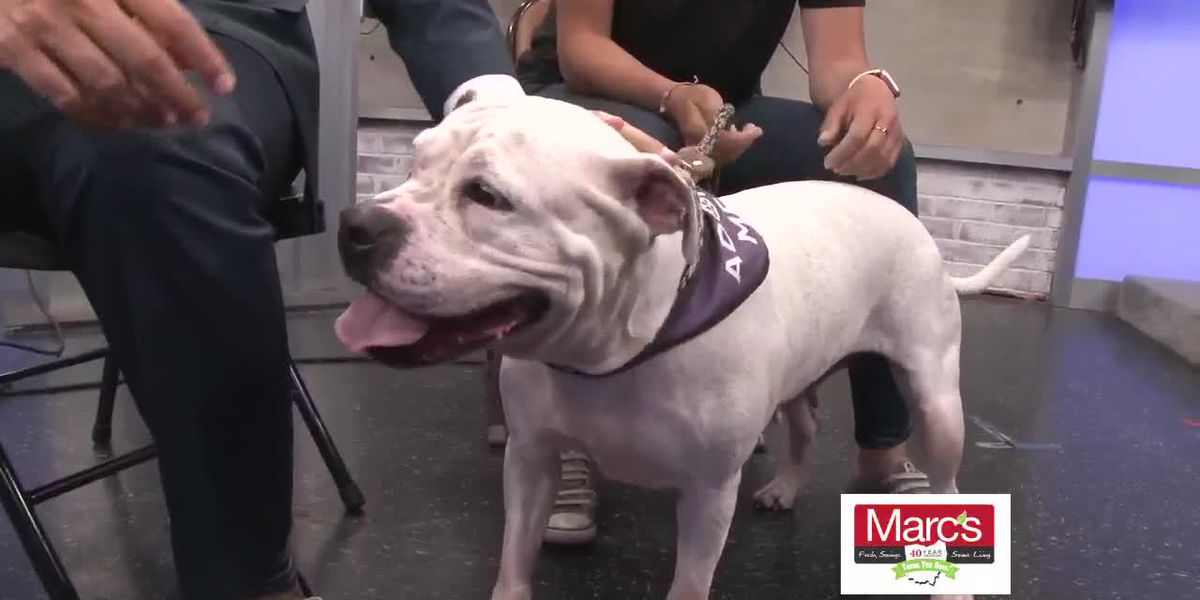 Cleveland APL Pet of the Week: Kila will help you score a date this summer