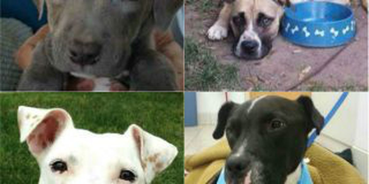 Cleveland dog rescues say homeless dogs at a crisis level