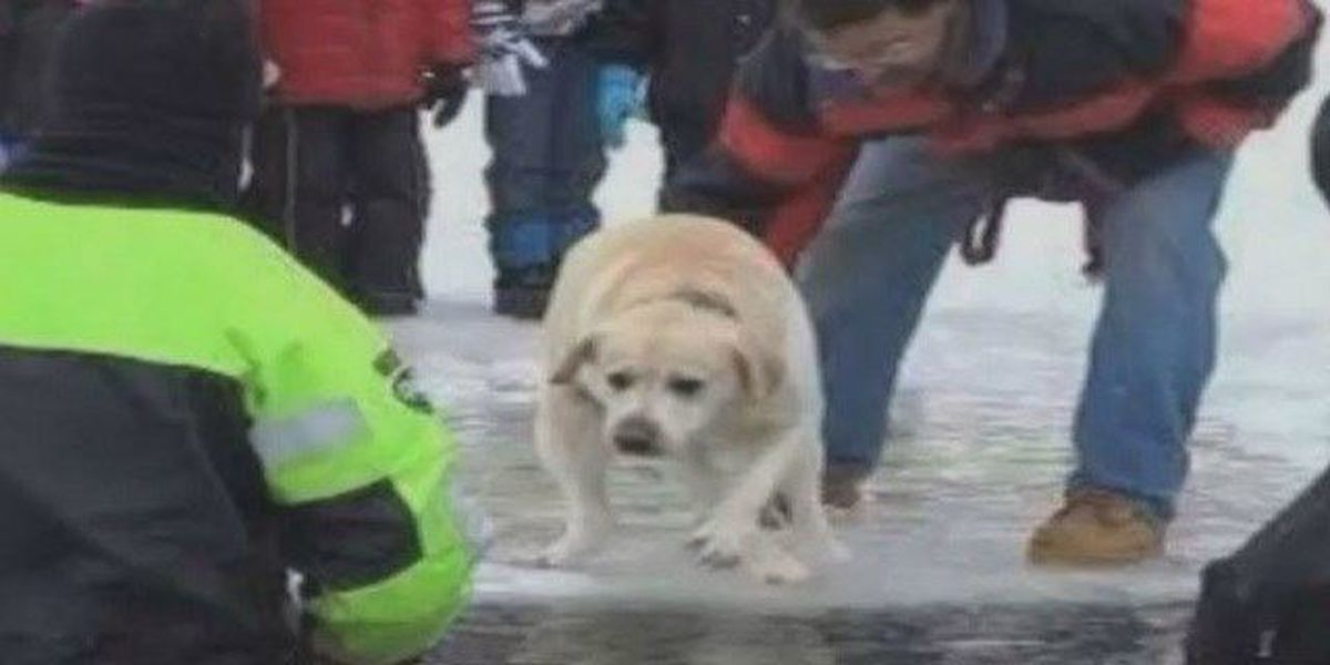MSPCA: No charges in dog's controversial polar plunge