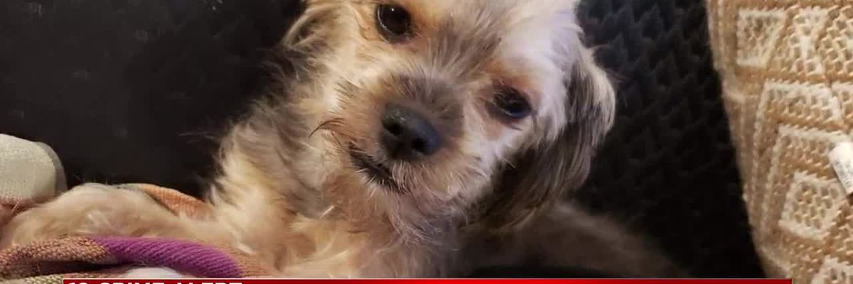 Brookpark woman says dog was stolen out of her car at Ohio City Deli