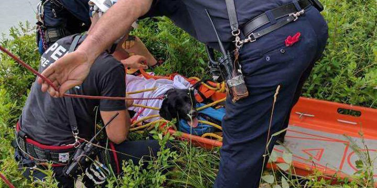 Dog rescued from embankment