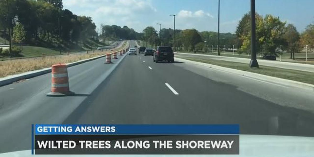 Cleveland answers why dead, dying trees on Shoreway haven't been replaced