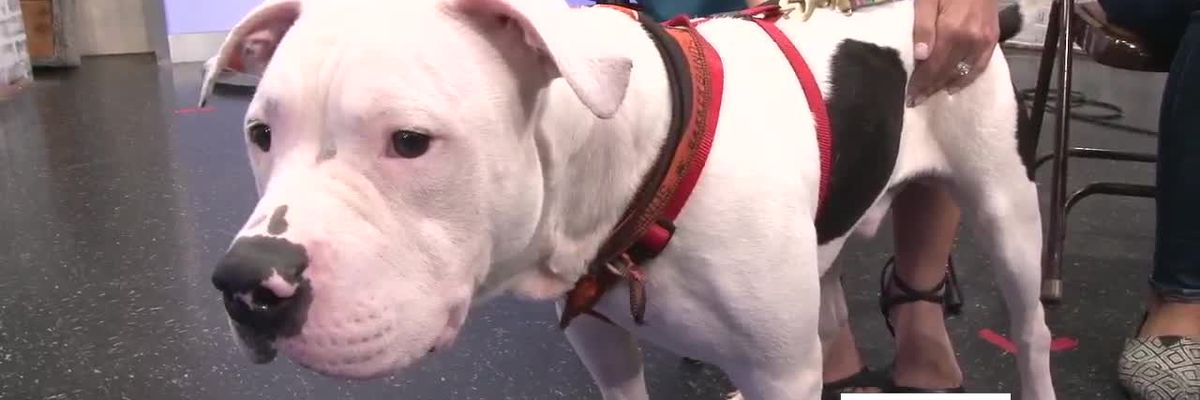 Cleveland APL Pet of the Week: Get in the huddle with Barker Mayfield