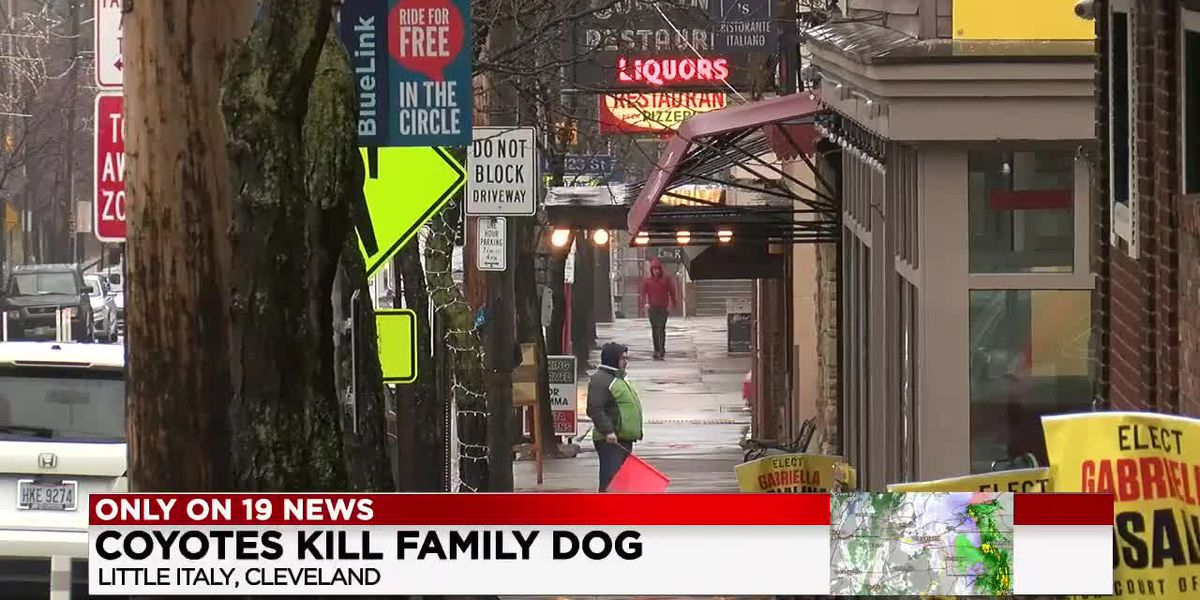 Coyotes attack and kill family dog in Cleveland's Little Italy