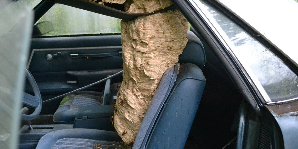 Video of Ohio 'Bee Man' removing hornets' nest from car goes viral (watch)