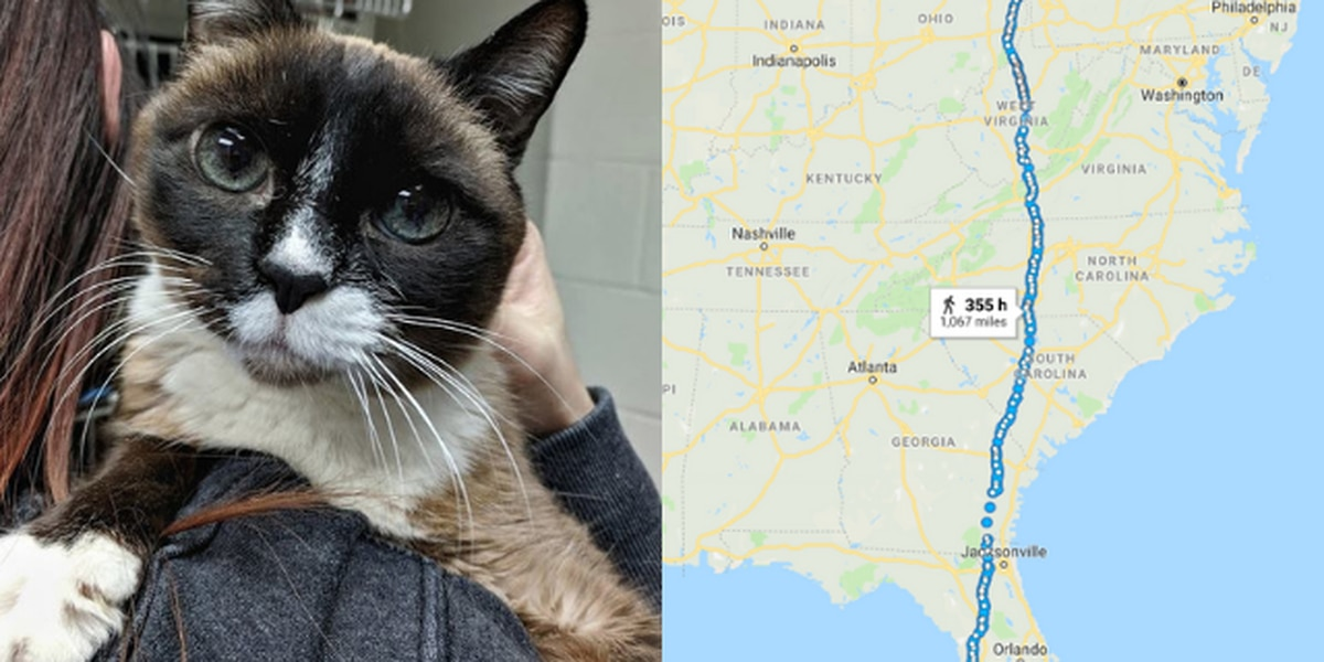 Cat separated from owner in Florida found in Northeast Ohio nearly 8 years later