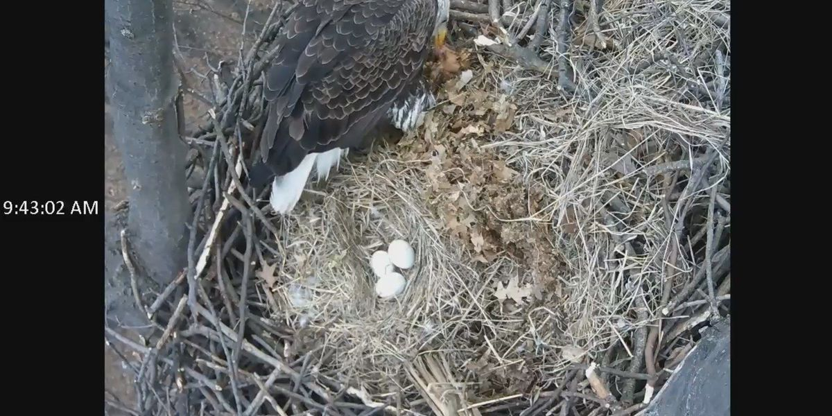 A 3rd egg in eagle's nest at Redwood Elementary in Avon Lake
