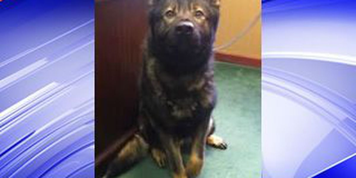 Kent Police welcome new K9 officer