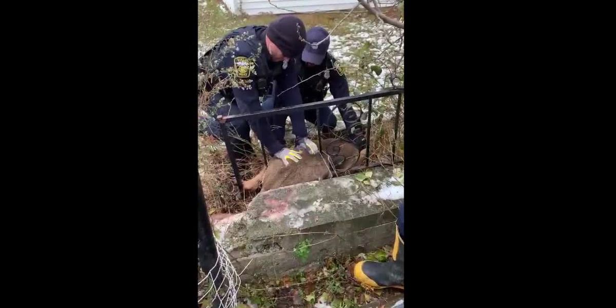 Baby deer caught in fence carefully freed by Euclid first responders