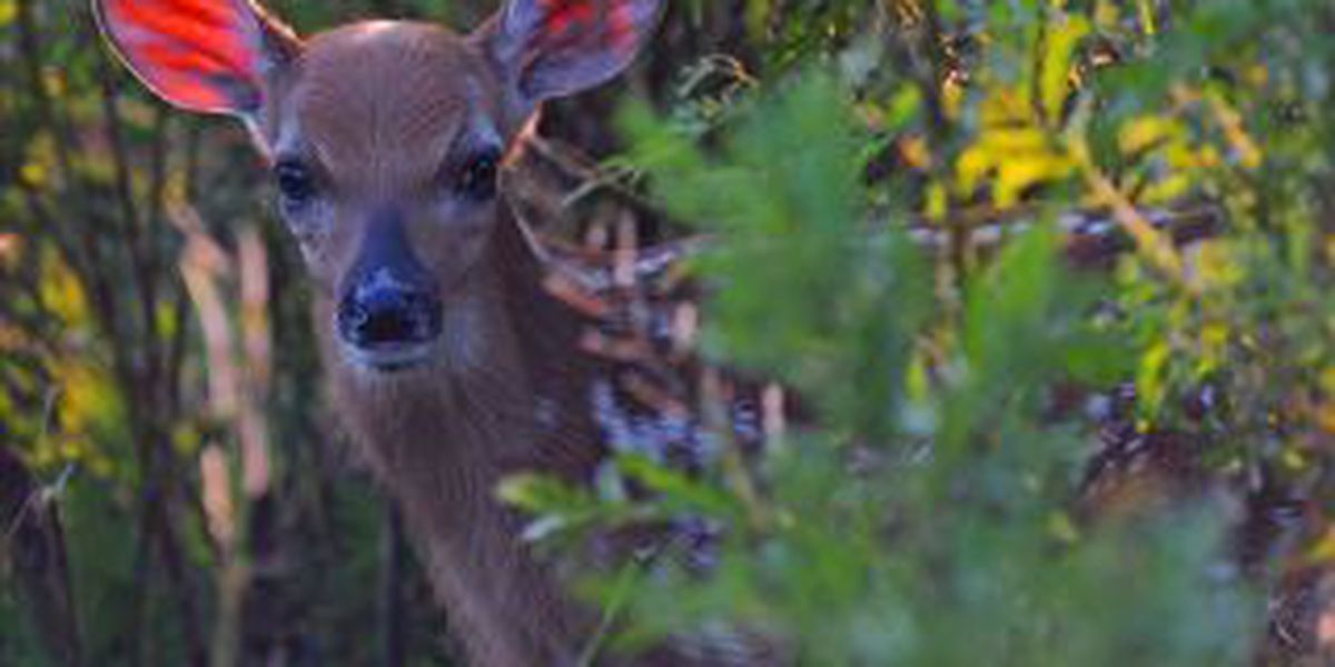 Man cited for hunting on unauthorized property