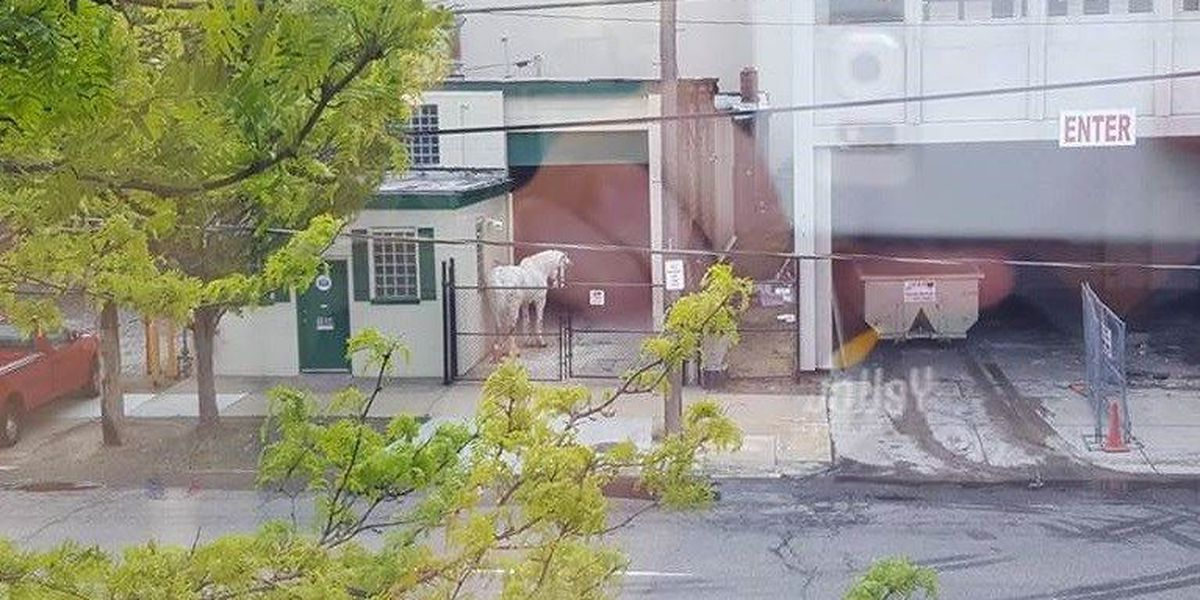 PHOTO: Chained horse in downtown CLE causes uproar