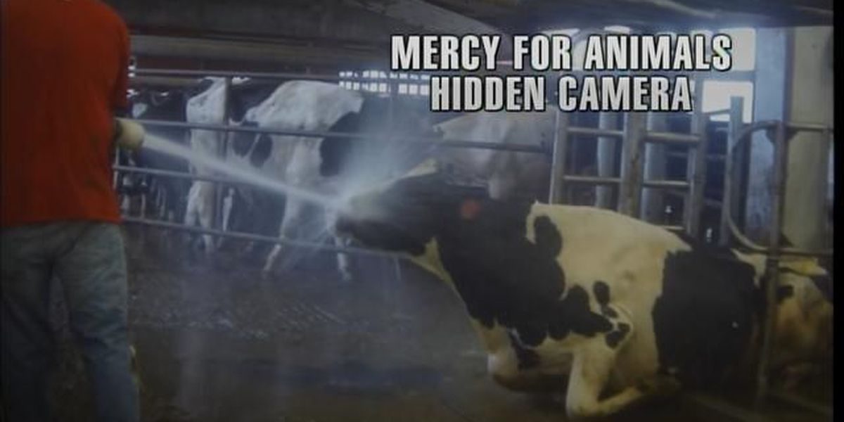 More questions in Dairy Farm investigation