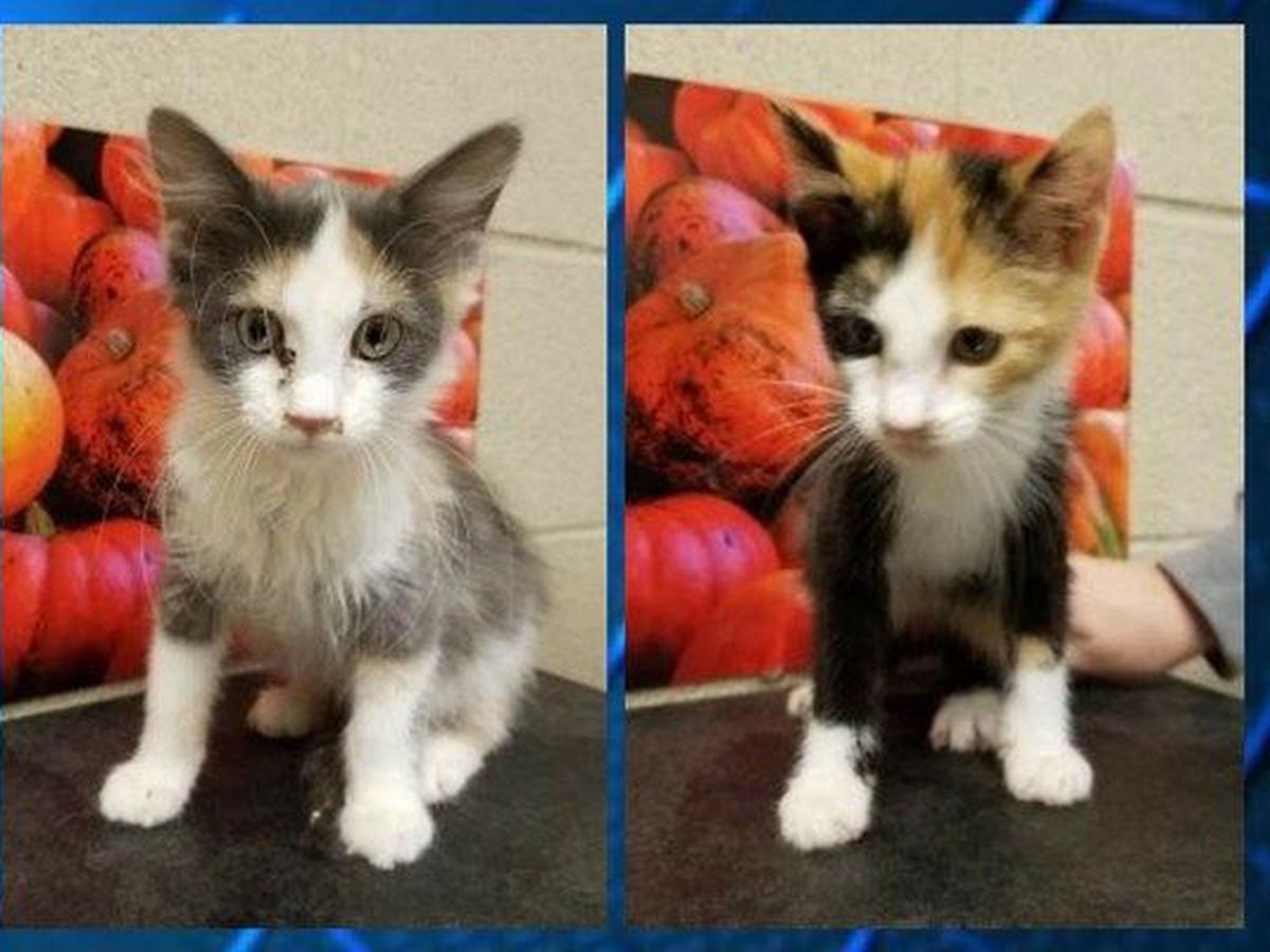 Sister and Sherri seek a Furever home: Cleveland APL Pet of the Week