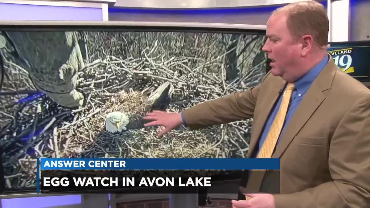 Unlike April the giraffe, we know when the eaglets will hatch in Avon Lake (within a day or two)