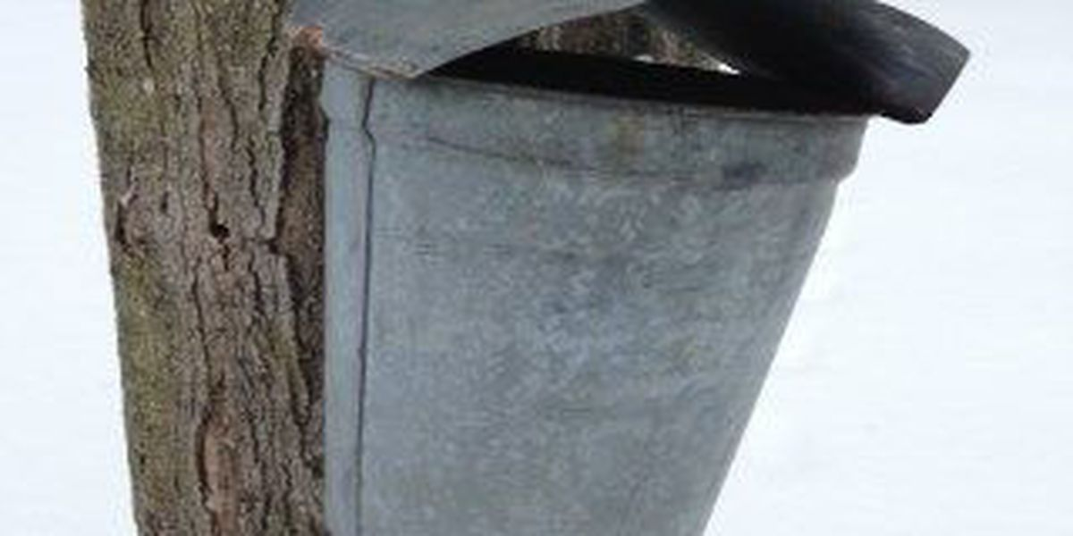 Cold temps delay maple syrup production