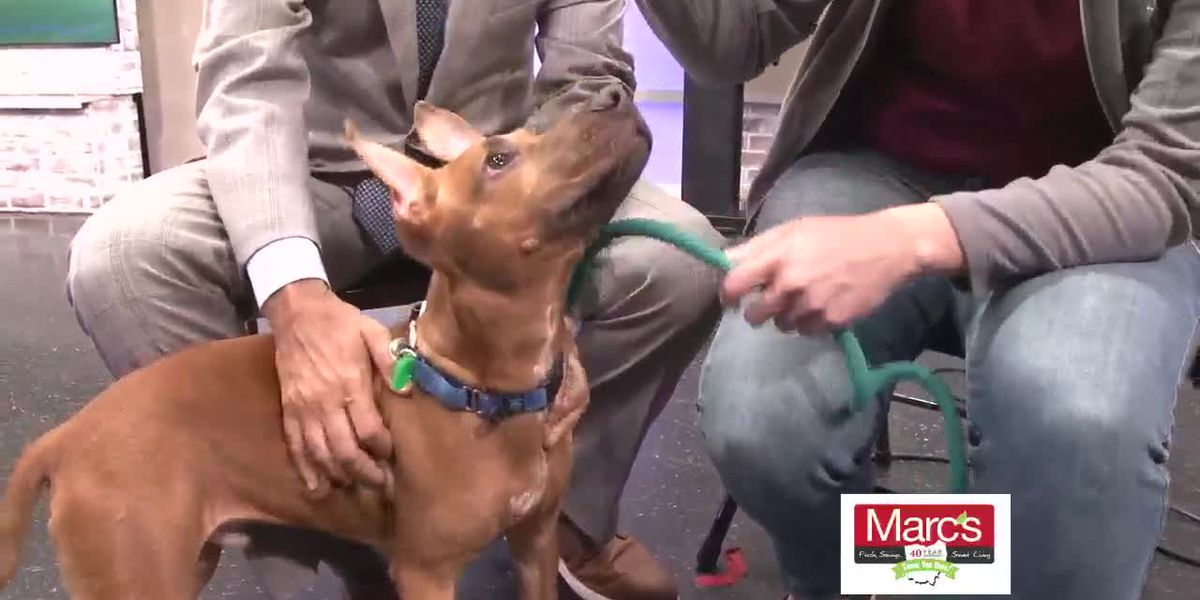 Cleveland APL Pet of the Week: Shepherd mix pup is ready to break some hearts