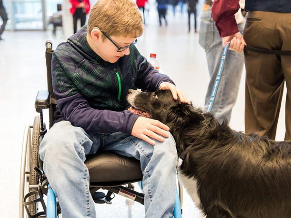 Northeast Ohio's blind dog 'Stevie Wonderful' named 2020 rescue of the year in nationwide contest