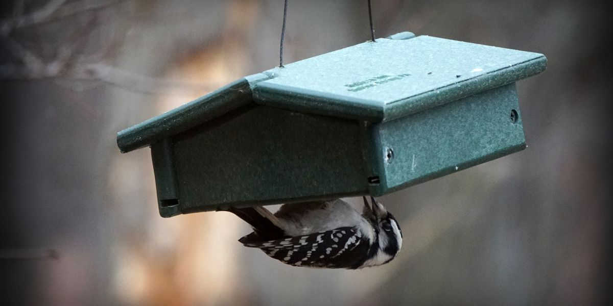 Bird feeders in Strongsville violate city ordinance?