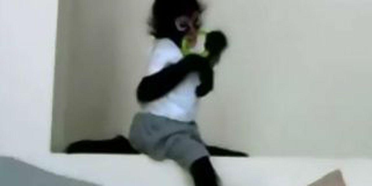 Spider monkey put down after biting man at car dealership